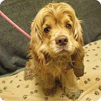 Adopt A Pet :: *GRIFFIN - Upper Marlboro, MD