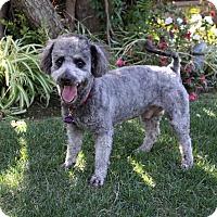 Adopt A Pet :: SUTTON - Newport Beach, CA