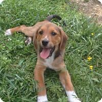 Adopt A Pet :: Mandy, most loving baby girl! - Snohomish, WA