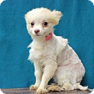 Adopt A Pet :: Corolla ADOPTION PENDING