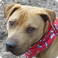 Adopt A Pet :: Moe Joe! - St Petersburg, FL