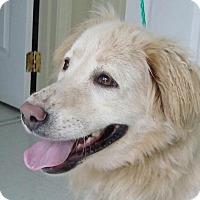 Adopt A Pet :: Kayla - Erwin, TN