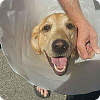 Adopt A Pet :: Hudson - Ogden, UT