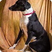 Adopt A Pet :: BABY - Anna, IL