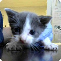 Adopt A Pet :: TITO - Atlanta, GA