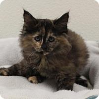 Adopt A Pet :: Hope - Austin, TX