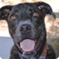 Adopt A Pet :: Bunny - Portola, CA