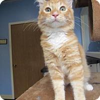 Adopt A Pet :: Freddie - Northfield, MN