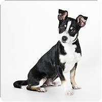 Adopt A Pet :: Mosley - Monterey, CA