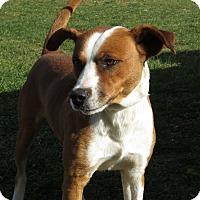 Adopt A Pet :: Doc - Unionville, PA
