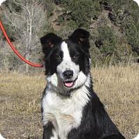 Adopt A Pet :: Thumper - Ridgway, CO