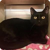 Adopt A Pet :: Missy Miss - Hesperia, CA