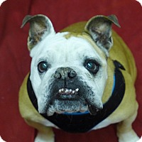 Adopt A Pet :: Matilda - Santa Ana, CA