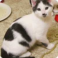 Adopt A Pet :: Weeble - McDonough, GA