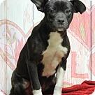 Adopt A Pet :: McKenzie (Has Application)