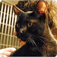 Adopt A Pet :: Kristen - Lunenburg, MA