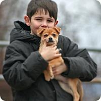 Adopt A Pet :: Plato - Spring City, PA