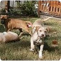Adopt A Pet :: LEIZA - Houston, TX