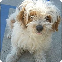 Adopt A Pet :: Jason - Los Angeles, CA