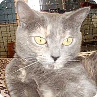 Adopt A Pet :: Gracie - Germansville, PA