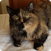 Adopt A Pet :: Dixie - Palmdale, CA
