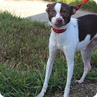 Adopt A Pet :: Spenser - Waldorf, MD