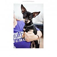 Adopt A Pet :: Snickers - Edmond, OK