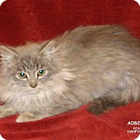 Adopt A Pet :: *DENALI - Hanford, CA