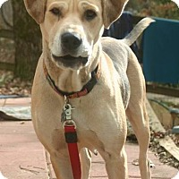 Adopt A Pet :: Pepper - Alpharetta, GA