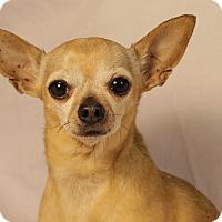 Adopt A Pet :: Tater Tot - Romeoville, IL
