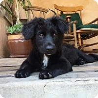 Adopt A Pet :: Bundle of Cuties-Brown adopted - El Cajon, CA