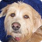 Adopt A Pet :: Carmen Hoosier