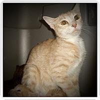 Adopt A Pet :: ESTELLA - Medford, WI