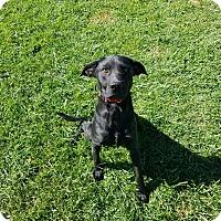 Adopt A Pet :: Xolo - Moberly, MO