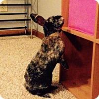 Adopt A Pet :: Cadbury - Brownsburg, IN