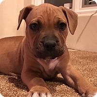 Adopt A Pet :: Hidey - Phoenix, AZ