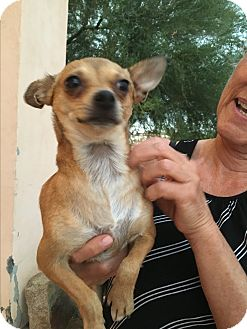 Chihuahua Mix Dog for adoption in Phoenix, Arizona - Jenna