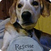 Adopt A Pet :: Christina - Grafton, WI