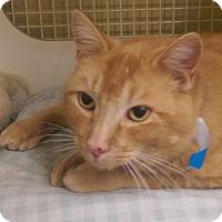 Adopt A Pet :: Clementine - Ogden, UT