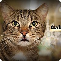 Adopt A Pet :: Gabriel - Springfield, PA