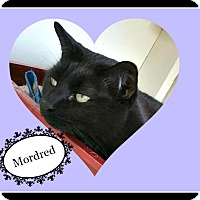 Adopt A Pet :: Mordred - Tombstone, AZ
