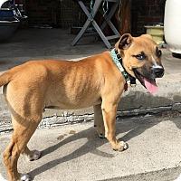 Adopt A Pet :: Reggie - Houston, TX