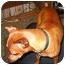 Photo 1 - Miniature Pinscher Dog for adoption in Florissant, Missouri - Alice