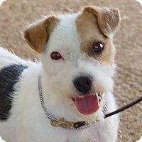 Adopt A Pet :: HAMMER - Scottsdale, AZ