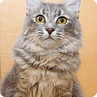 Adopt A Pet :: Mimi - Irvine, CA