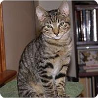 Adopt A Pet :: Milo - Portland, ME