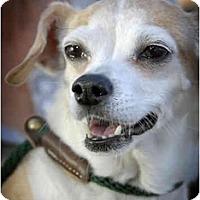 Adopt A Pet :: D.J. - Canoga Park, CA