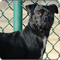 Adopt A Pet :: Max - Cheyenne, WY