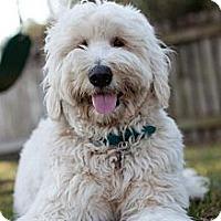 Adopt A Pet :: FL - Lexi - Boca Raton, FL