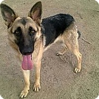 Adopt A Pet :: SAMATHA - Valley Village, CA